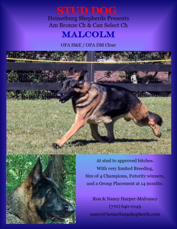 information on a german shepard dog called Malcom